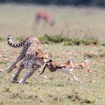 Is Dave Ramsey's Gazelle Intensity a Financial Fad?